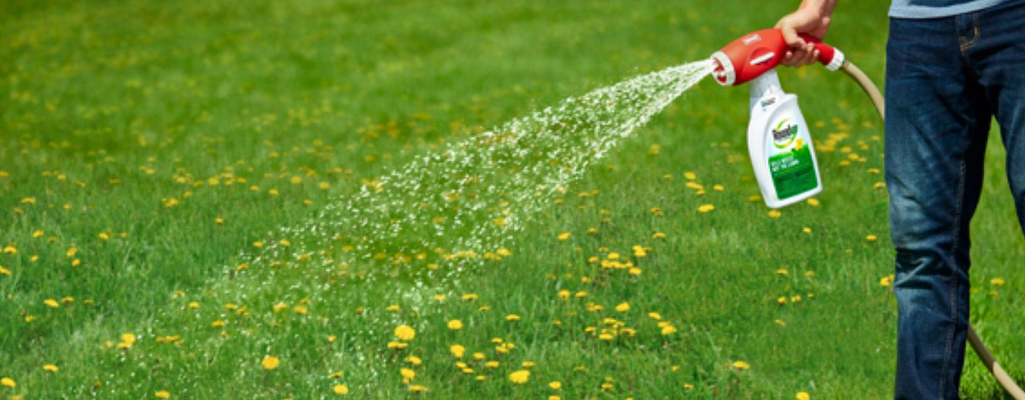 How to kill weeds in lawns lawn pinterest weed killers lawn
