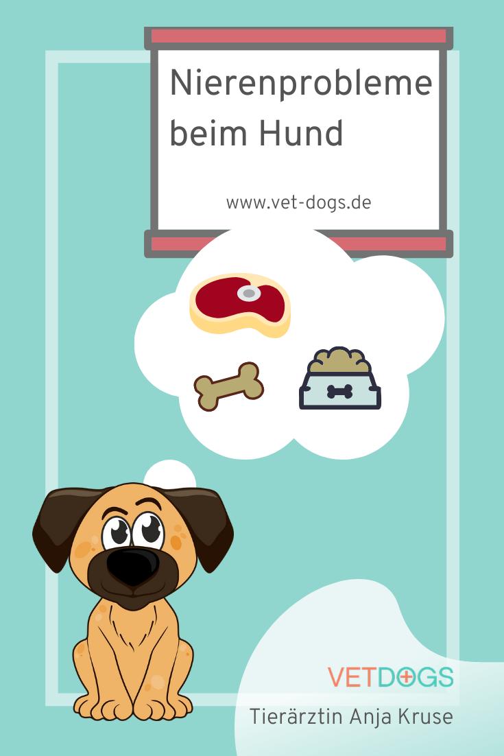 Webinar Allergien Futtermittelunvertraglichkeiten Beim Hund Vet Dogs Dein Online Tierarzt Mit Ernahrungsberatung Und Hundeblog Dein Allergie Webinar In 2020 Hunde Hundegesundheit Tierarzt