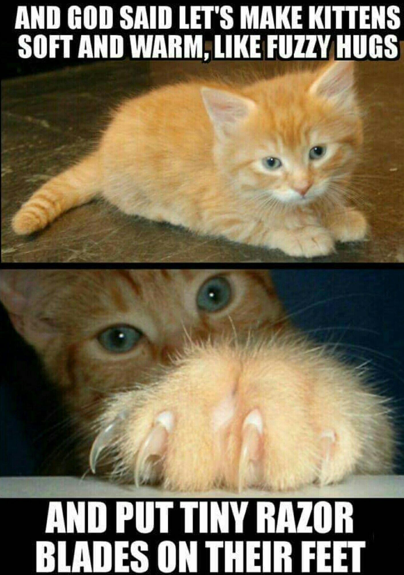 Pin On Kitten