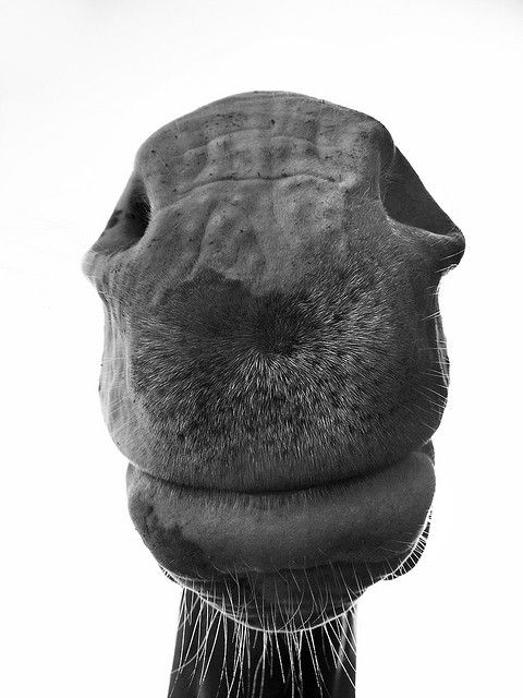 horse nose :) these make me insanely happy! The smell, the texture and the heat from their breath, travels straight to my soul and fills it with mana from heaven