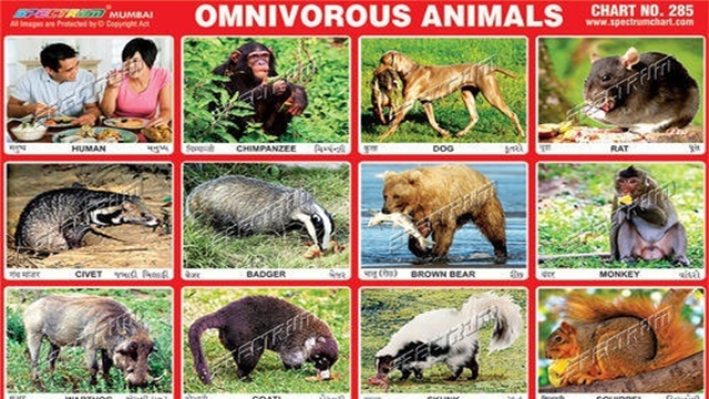 Animals that eat both plants and meat Animal stickers
