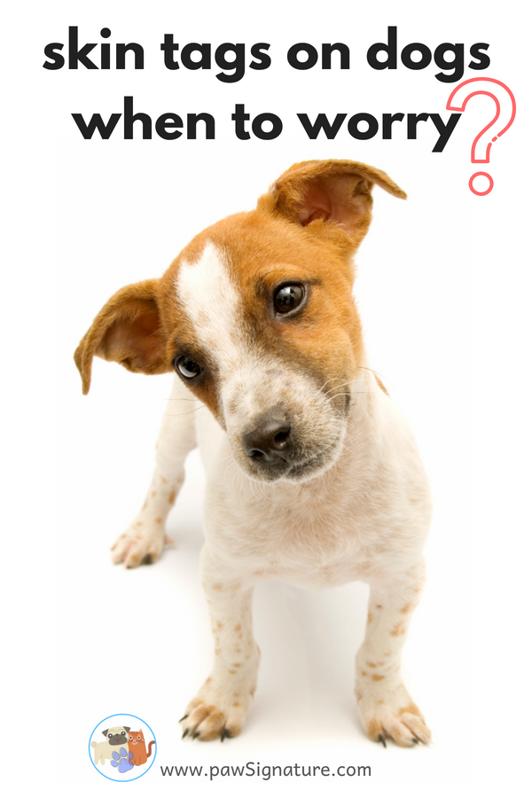 Everything you need to know about skin tags on dogs