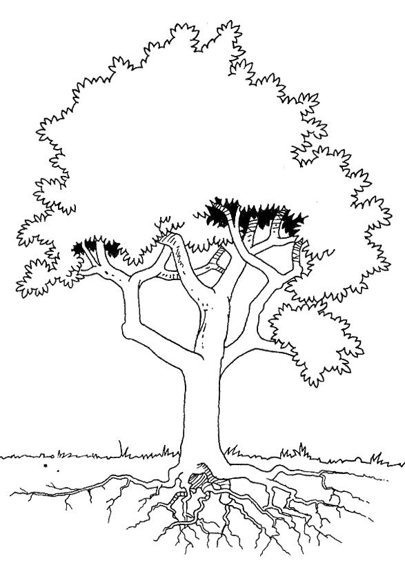 The Tree Is Seen In Detail Coloring For Kids Tree Coloring Pages