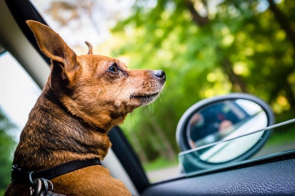 Uber's newest feature alerts drivers that pets will be
