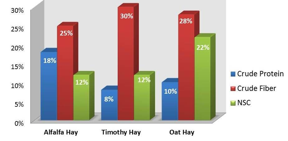 Hay Comparison Chart Best To Feed Your Horse