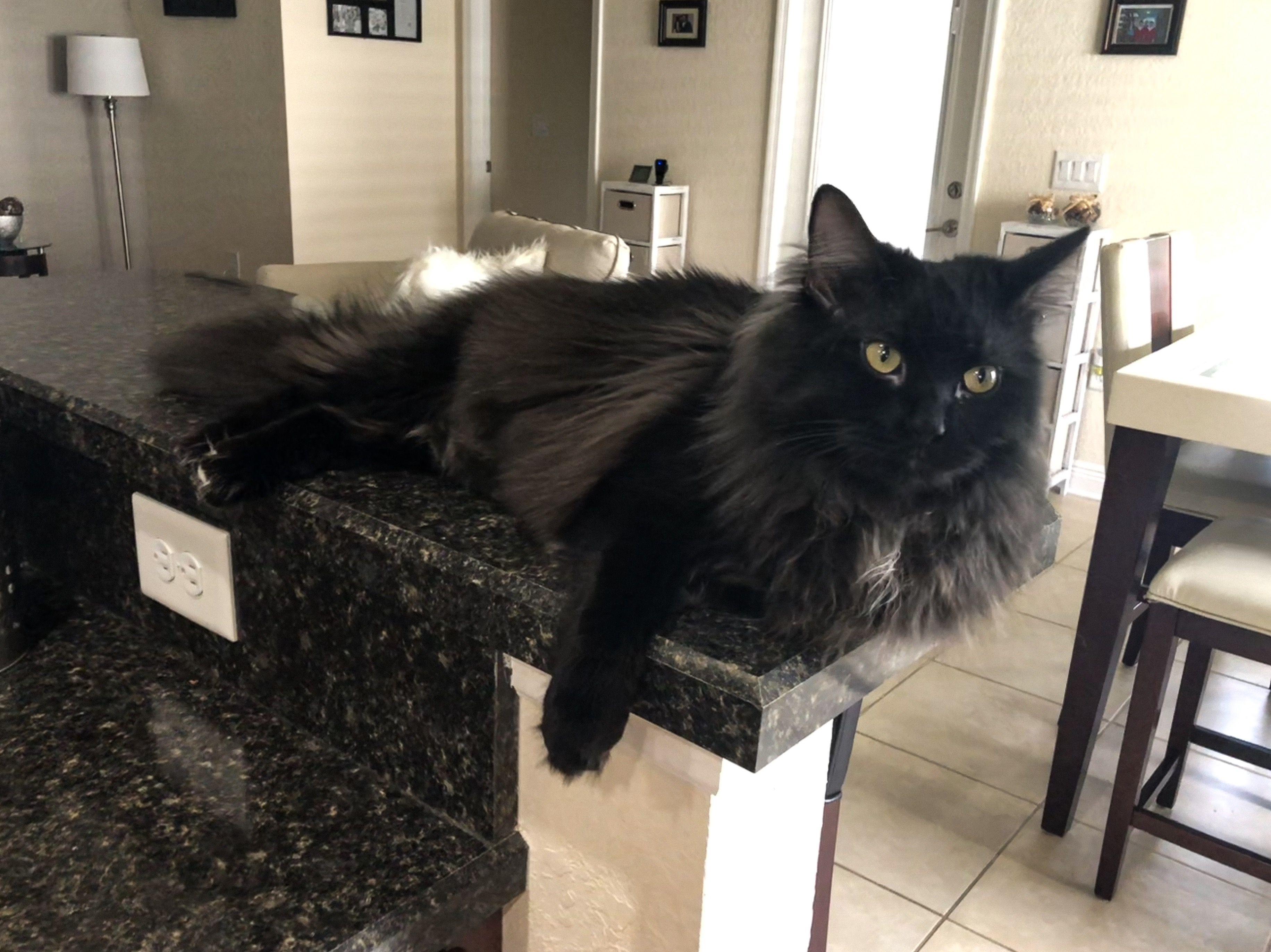 Pin On Majestuoso Gato Prieto Black Cat The Best