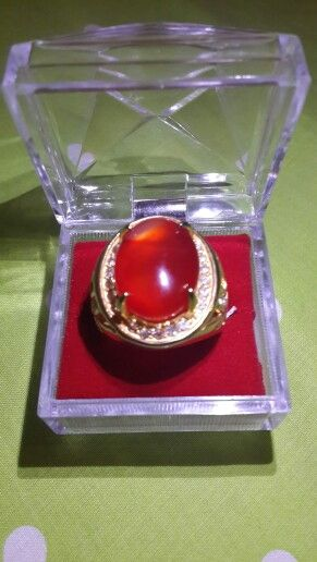 Red raflesia