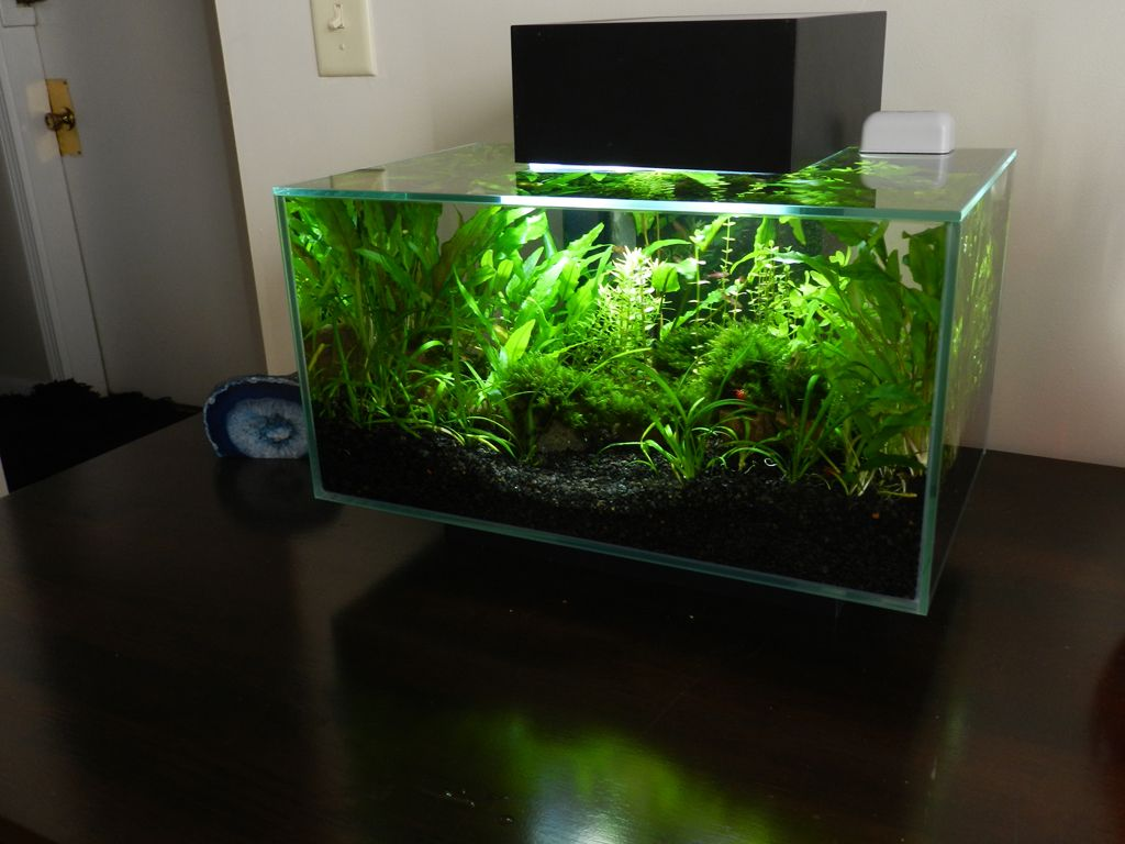 Marvelous Micr0u0027s Fluval Edge
