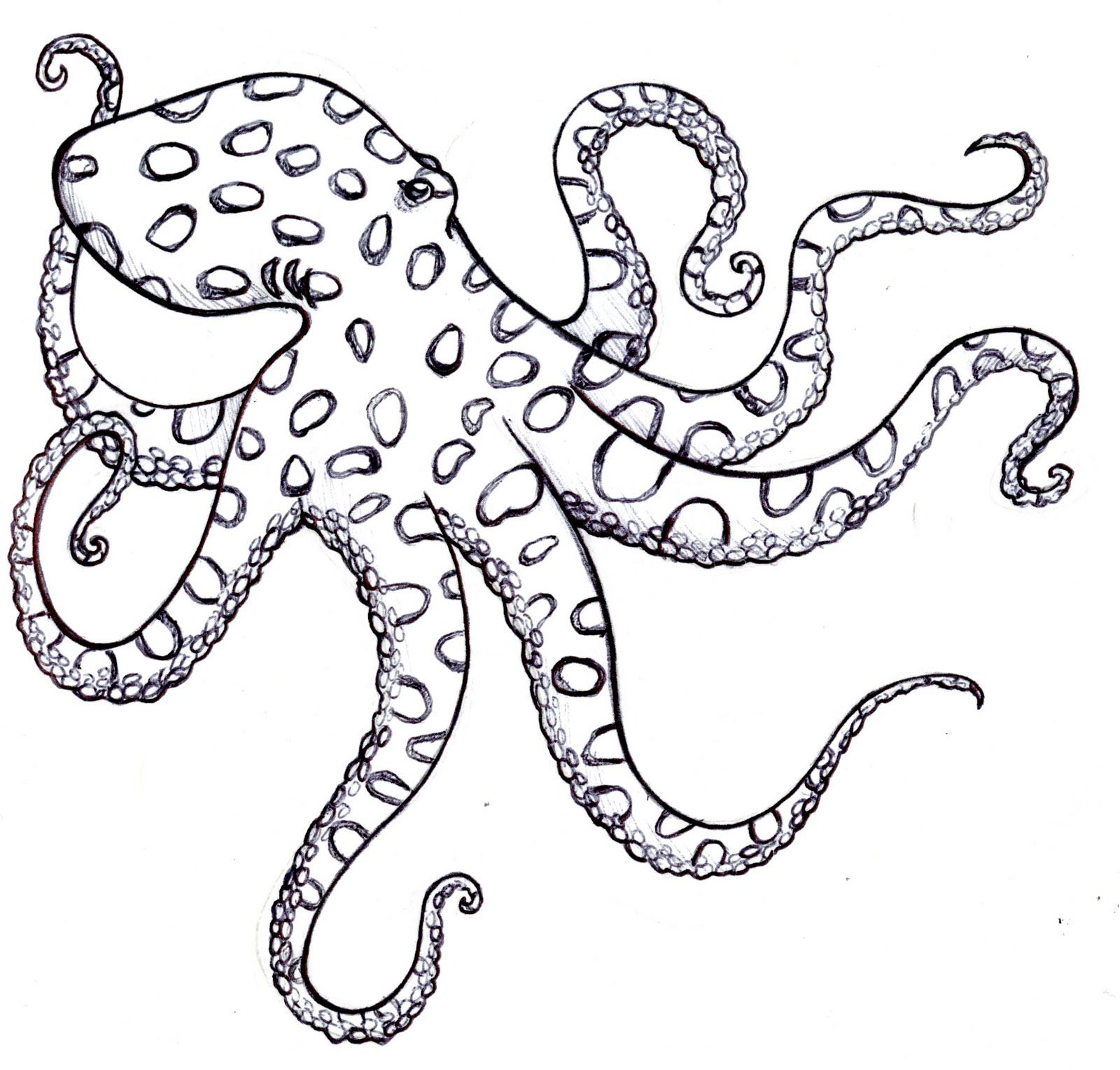 Black And White Octopus Drawing