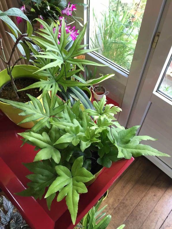 plante exotique int rieur foug re plante d 39 int rieur paris 19e 75 flore tropicale