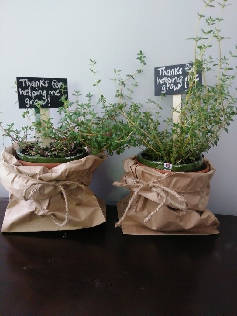End of year teachers gifts thyme plants bought reduced at