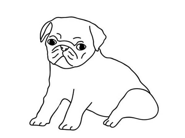 How To Draw Pug Puppies Sketch Coloring Page in 2019