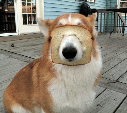 In-bread dog