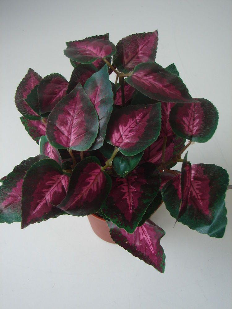 Buntnessel coleus topfpflanze kunstblume k nstliche for Deko topfpflanzen
