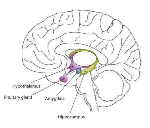 AP Psychology Review (@Psych_Review) | Twitter | Brain ...