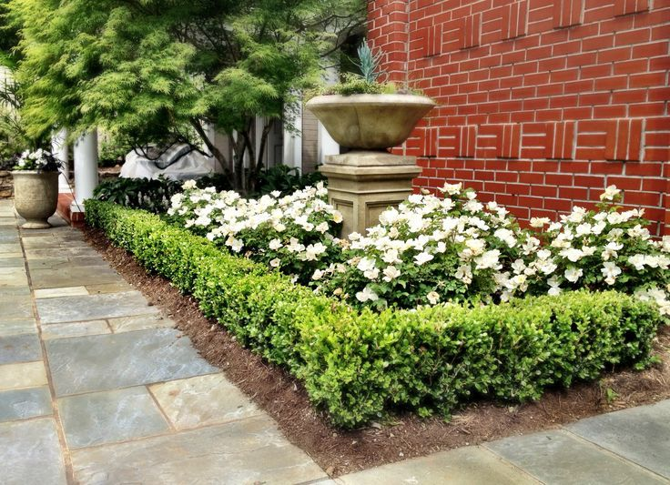 15 Must See Korean Boxwood Pins Boxwood Hedge Hydrangea Front Lawn Landscaping Boxwood Landscaping Front Yard Plants