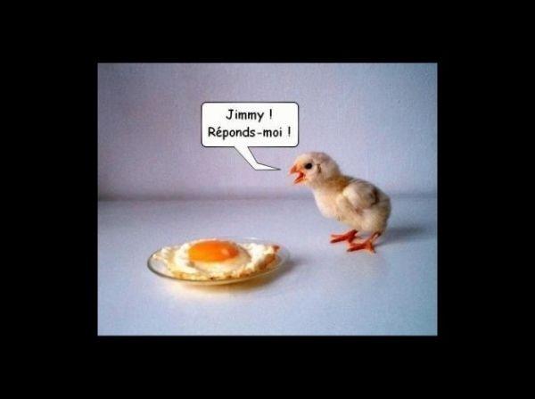 Reponds Moi Frere Commentaires Droles Poulet Drole Image Humour