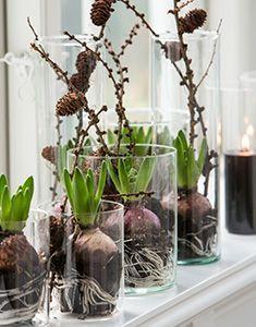 hyazinthen glas deko pinterest weihnachten ostern und dekoration. Black Bedroom Furniture Sets. Home Design Ideas