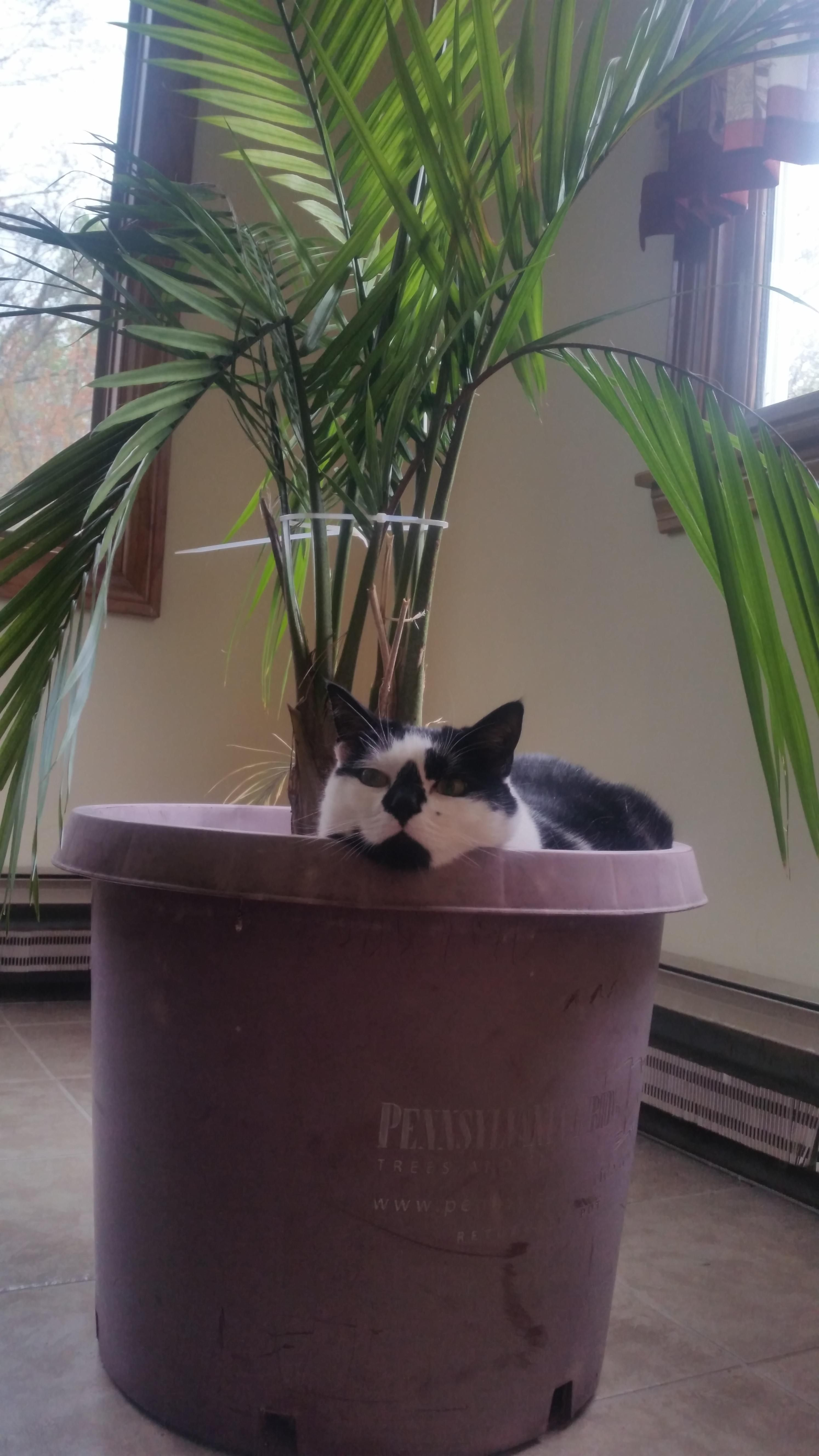 My cat does this to all my plants http://ift.tt/2pnPseX