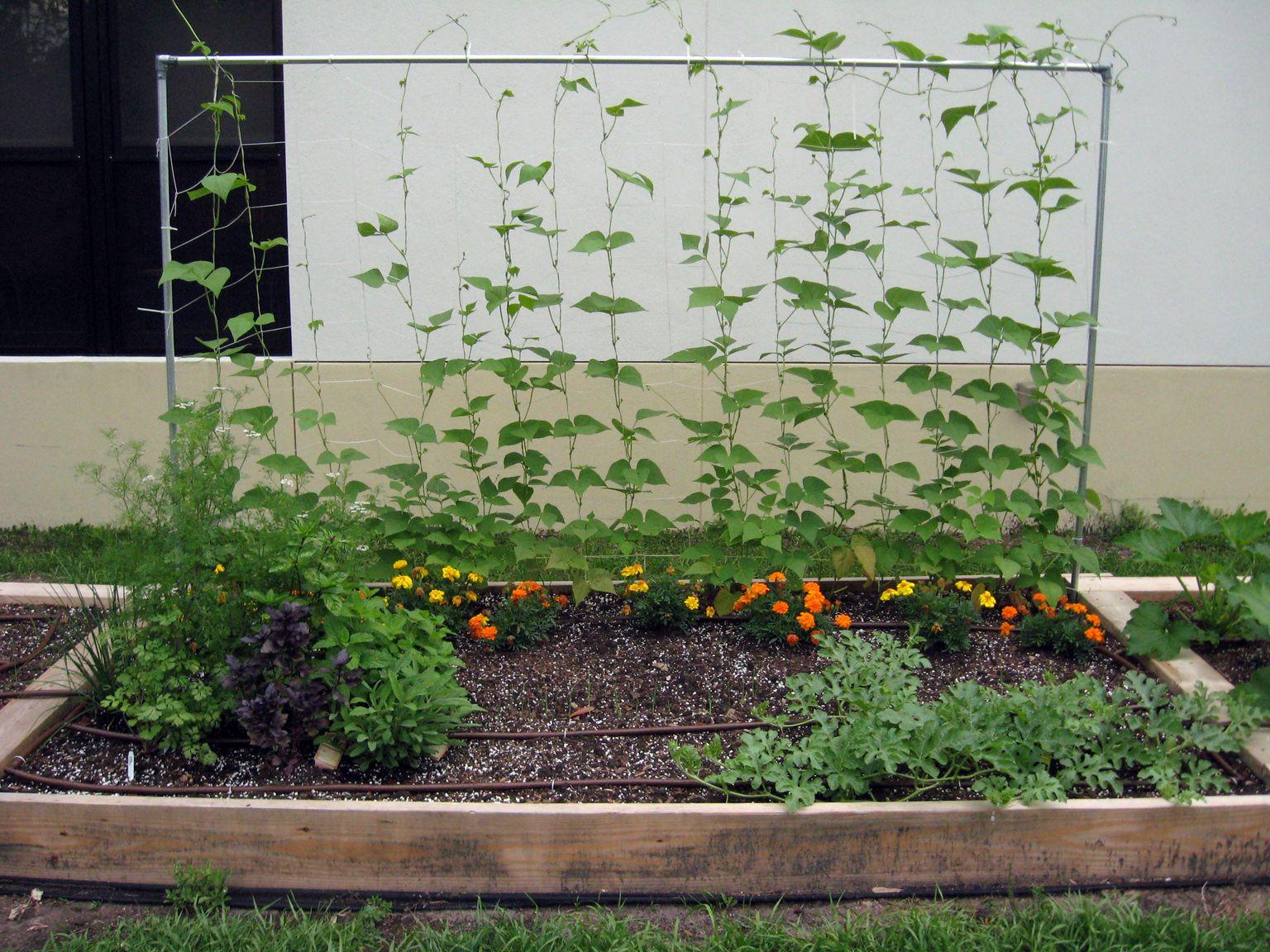 Backyard raised vegetable gardens - Gardening Raised Beds