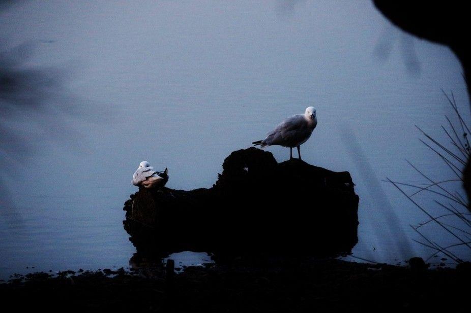 """GullPortrait"" by boldhotshot1952! Find more inspiring images at ViewBug - the world's most rewarding photo community. http://www.viewbug.com/photo/61847451"