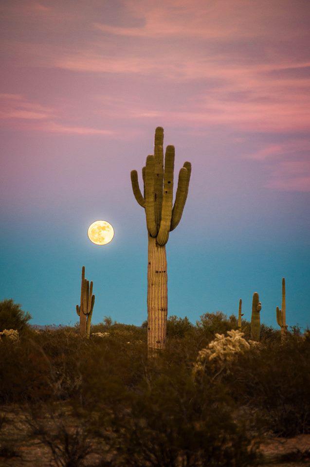 Erica Billingsley Hanks | Florence #desertlife