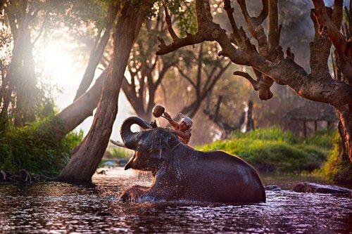Elephant Bath via Tumblr http://tmblr.co/ZAUREw1C8jVtq #elephant ...