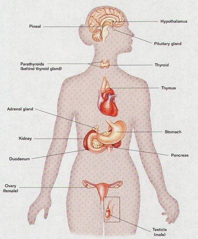Body Organs Location Chart From Biology Principles And