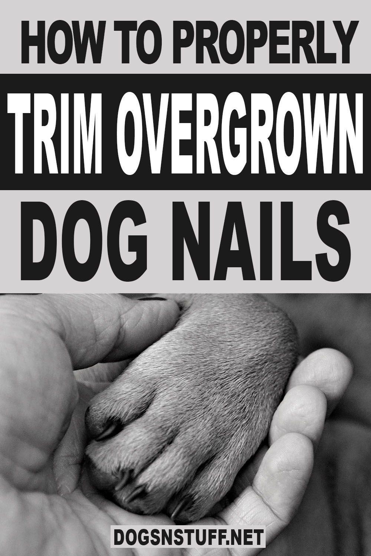 Pin On Dog Tips