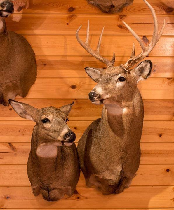 Buck N Doe Separate Mounts But Together Hunting Fishing Deer