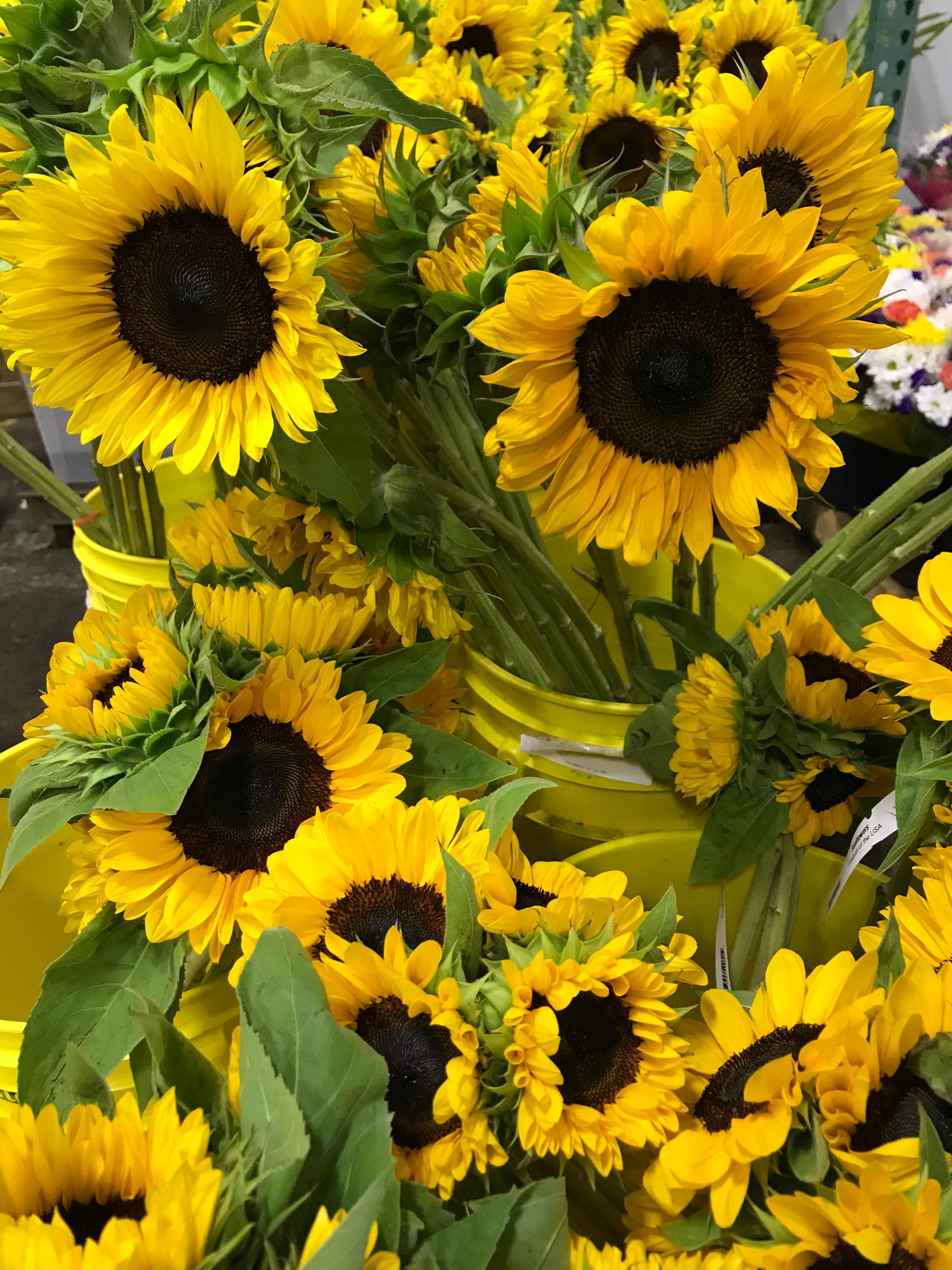 Sunflowers Wholesale Flowers Types Of Flowers Flowers Online