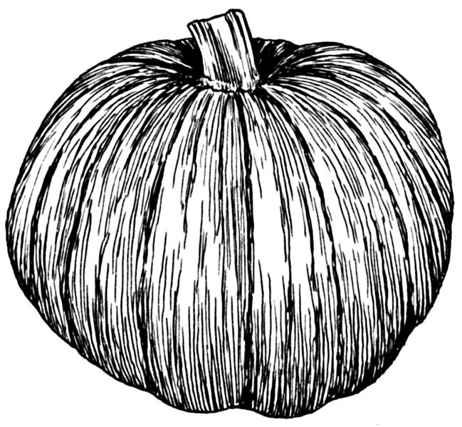 File Pumpkin Psf Png Wikimedia Commons Pumpkin Illustration Halloween Illustration Public Domain Images Vintage