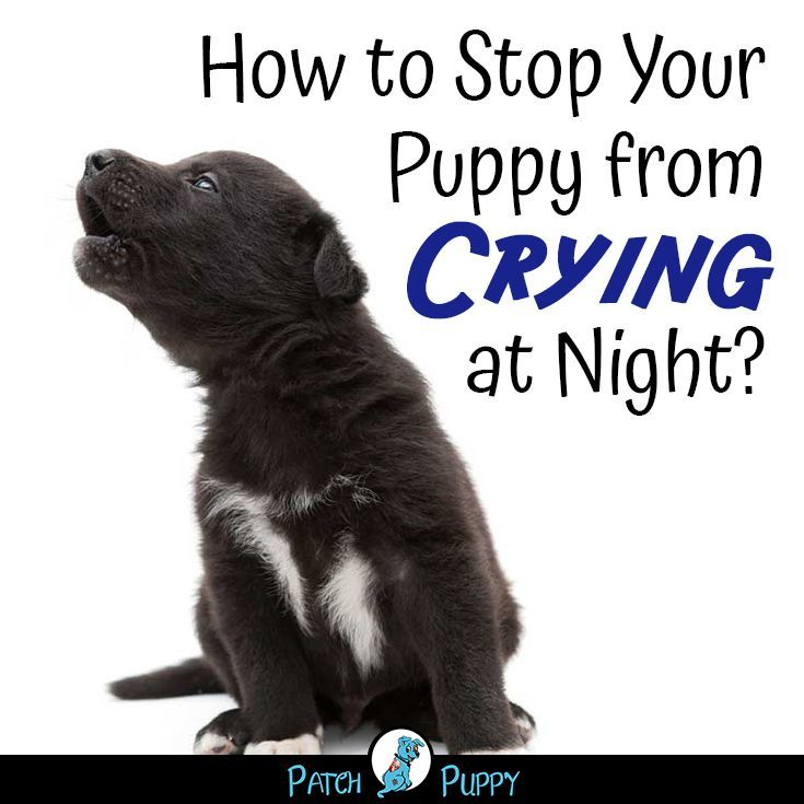 7 simple steps for crate training a puppy the first night