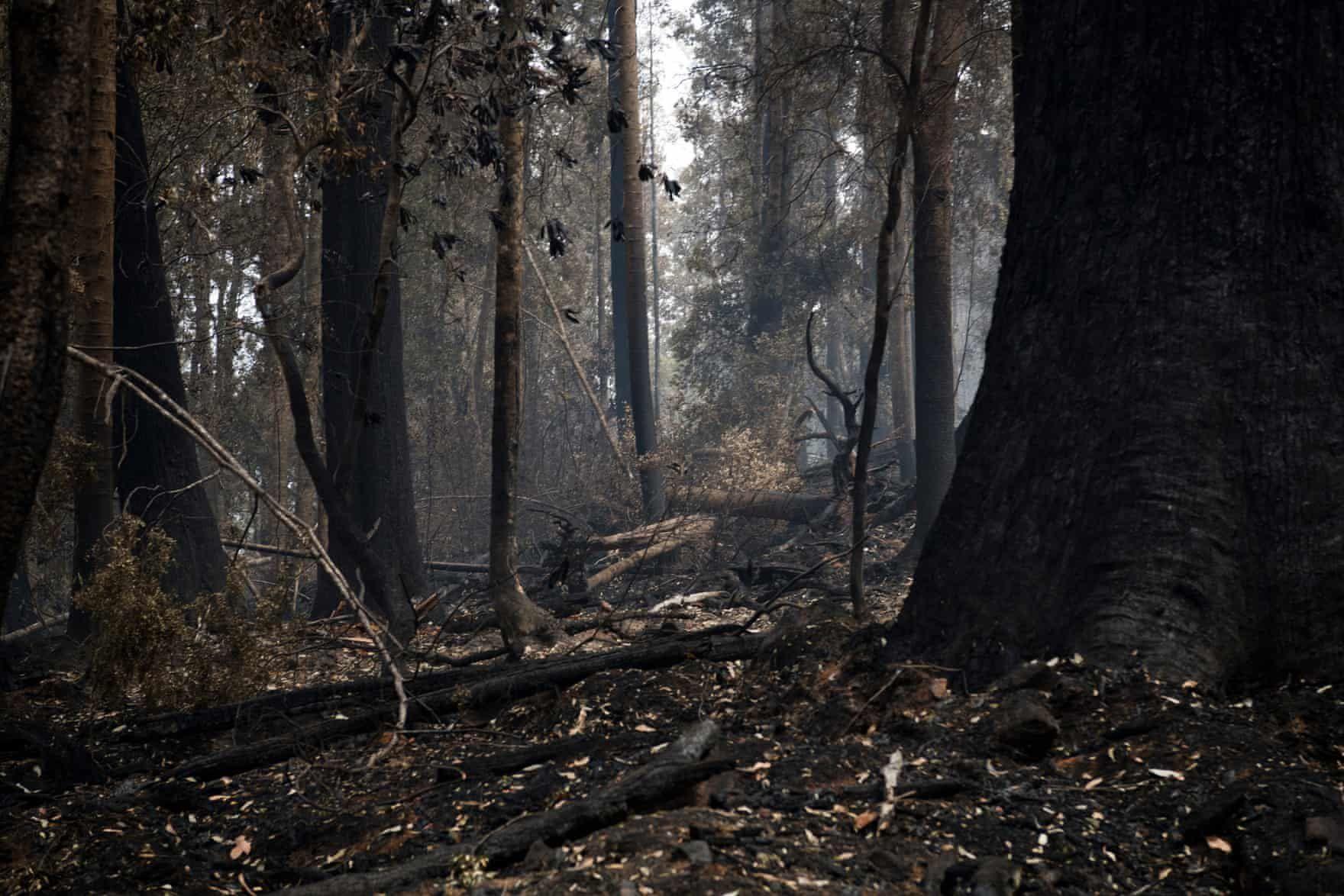 The destructive Tasmanian bushfires 2019 in pictures
