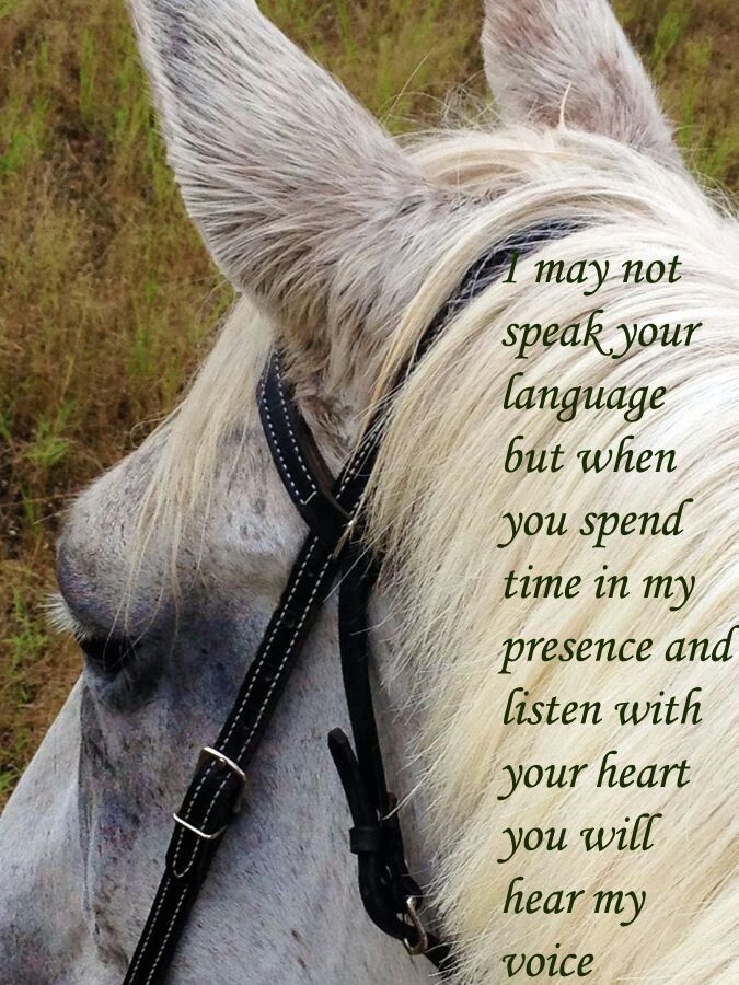 whole heart whole horse building trust between horse and rider