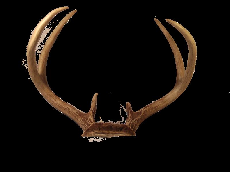 Transparent Deer Antlers Png Deer Antlers Clip Art Picsart