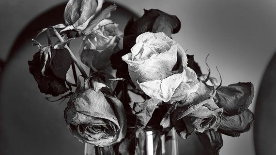 Dried roses is a still life fine art photography representing the seasons in our lives. Each season is different. While our latter season in