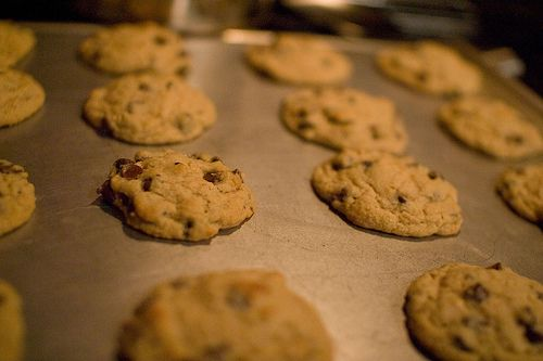 Chocolate chip cookies, fresh out of the oven.