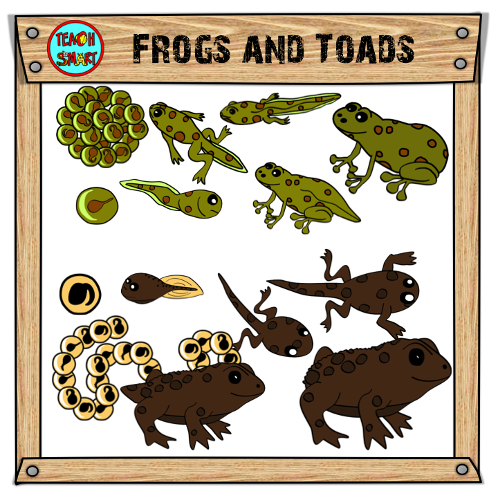 frogs and toads life cycle clip art rh pinterest ph Frog Clip Art Cartoon Tadpole with 4 Legs