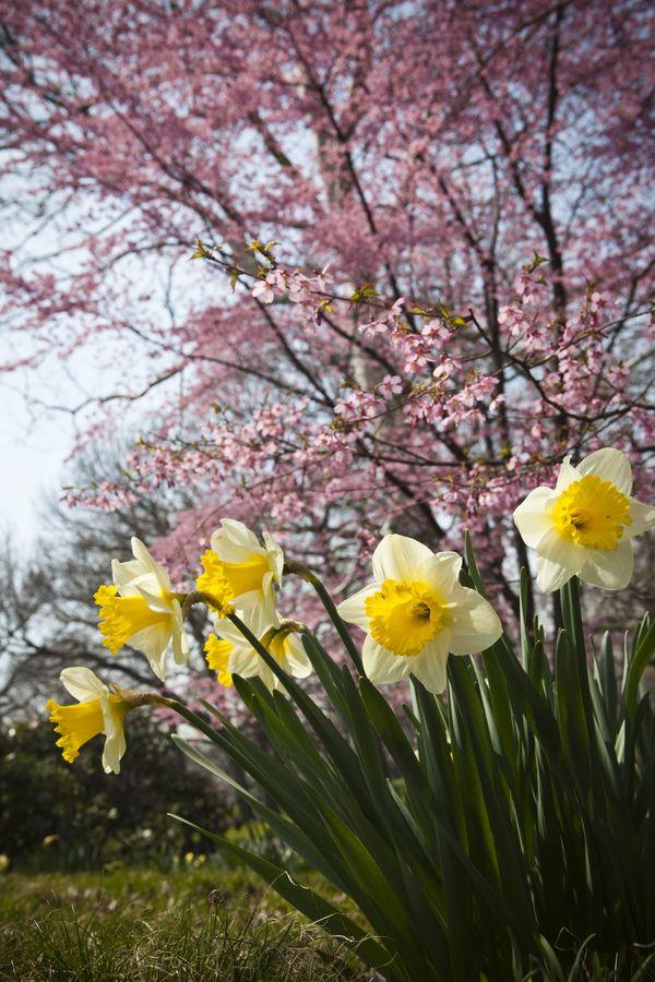 Beautiful springtime