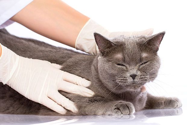 4 Tips About Cats Ringworm And Your Children Dengan Gambar