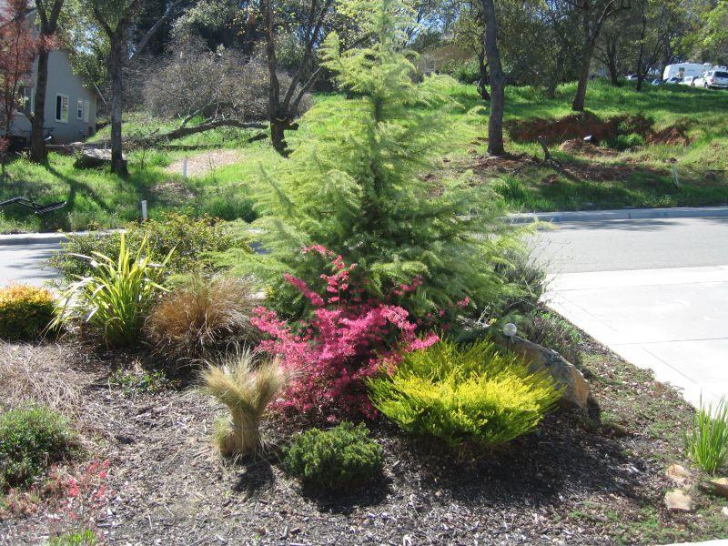 No grass landscape no grass landscaping http yardshare for No maintenance backyard ideas