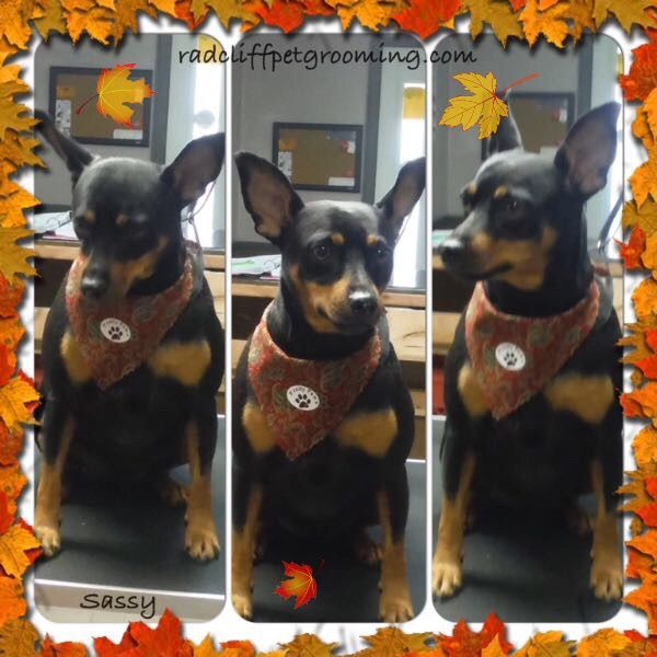 Groomed at - Pretty Paws LLC, Radcliff Ky www.facebook.com/radcliffpetgrowing