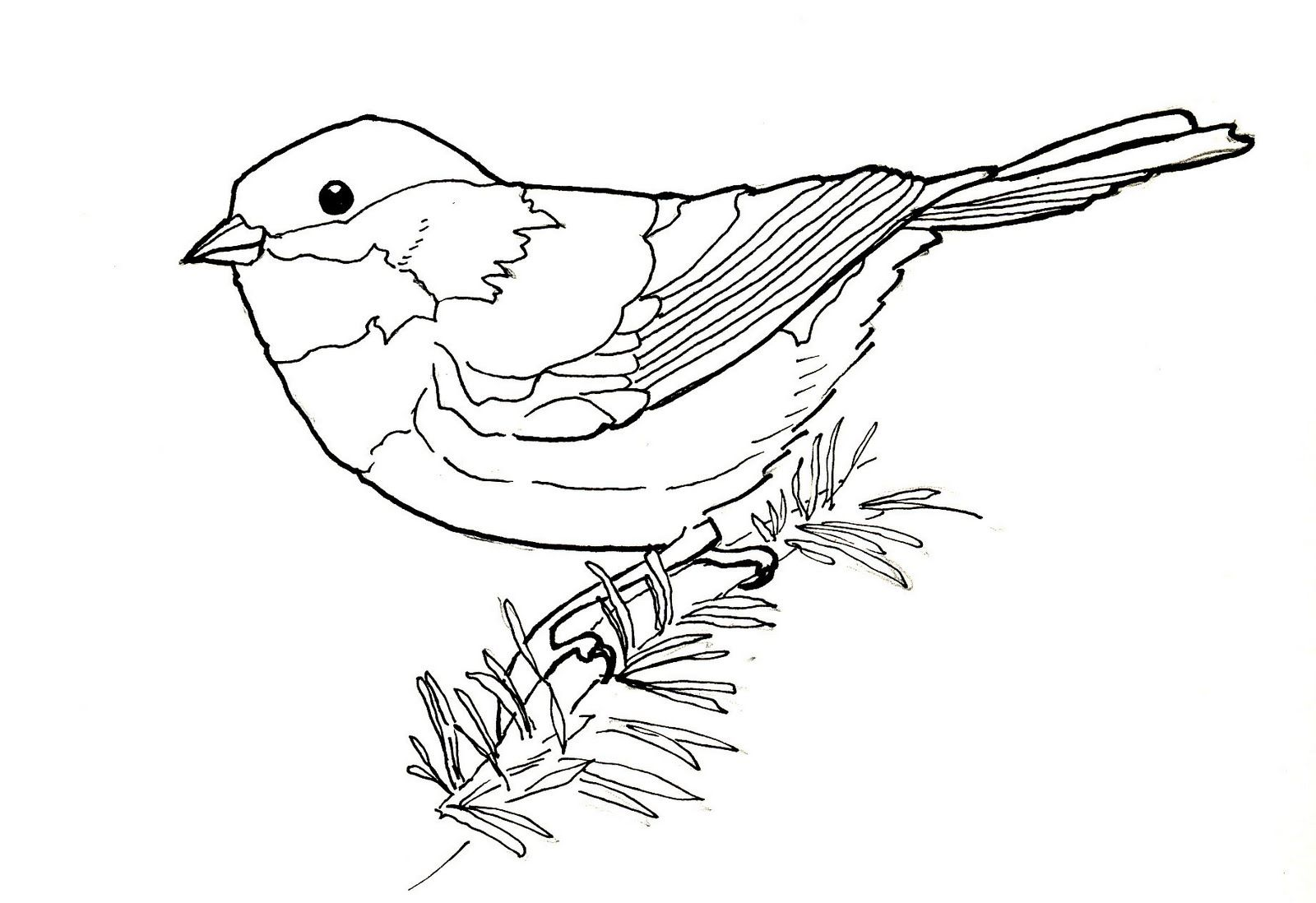 chickadee bird coloring pages - photo#25