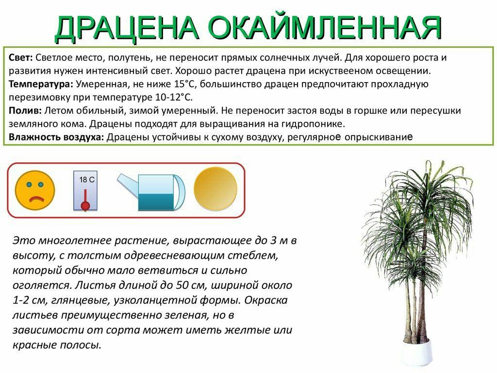 Комнатные растения и их обозначения в картинках