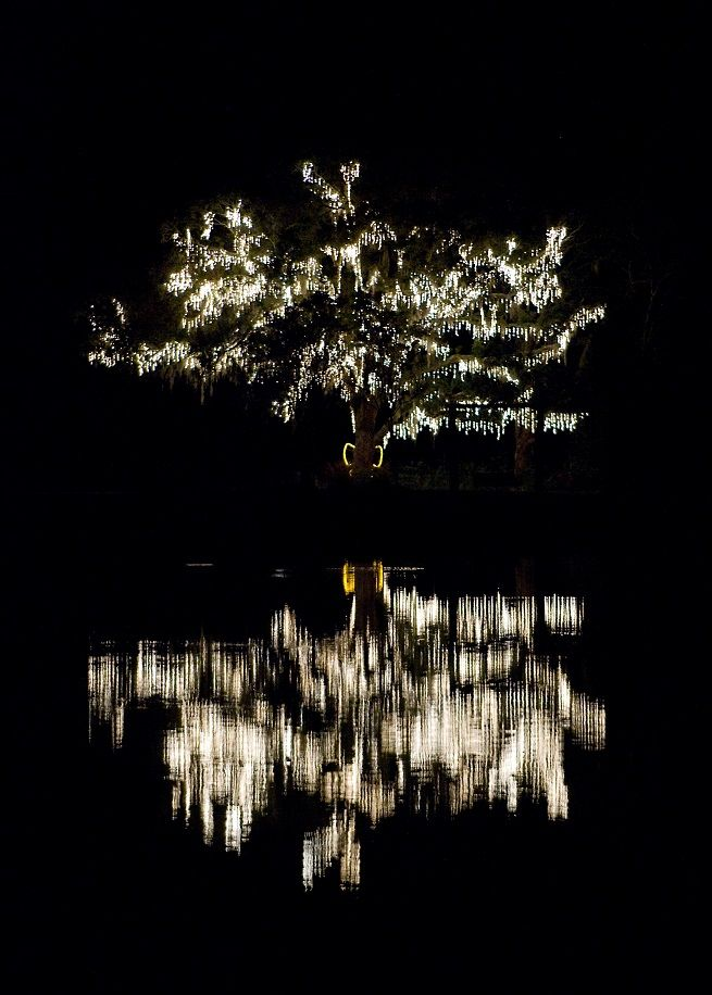 James Island Lights Glamorous Glowing White Trees Illuminate The Night At The Holiday Festival Of Design Inspiration