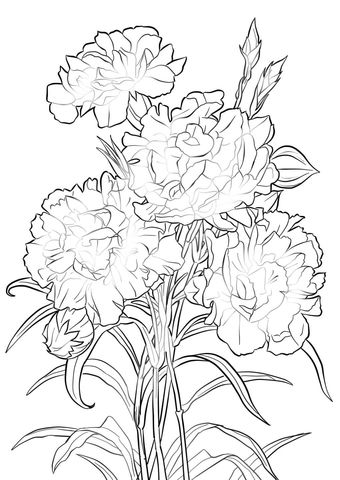 Scarlet Carnation Coloring Page From Carnation Category Select