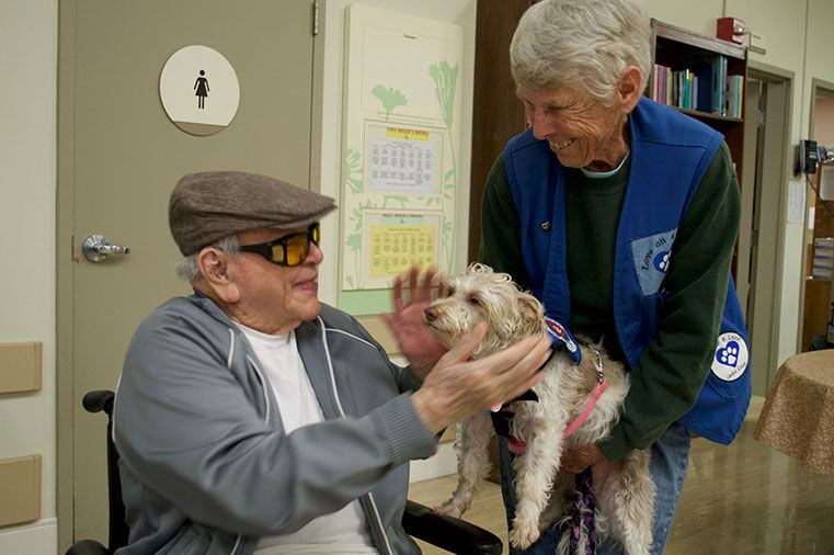 Better healing with pet therapy pets volunteer the