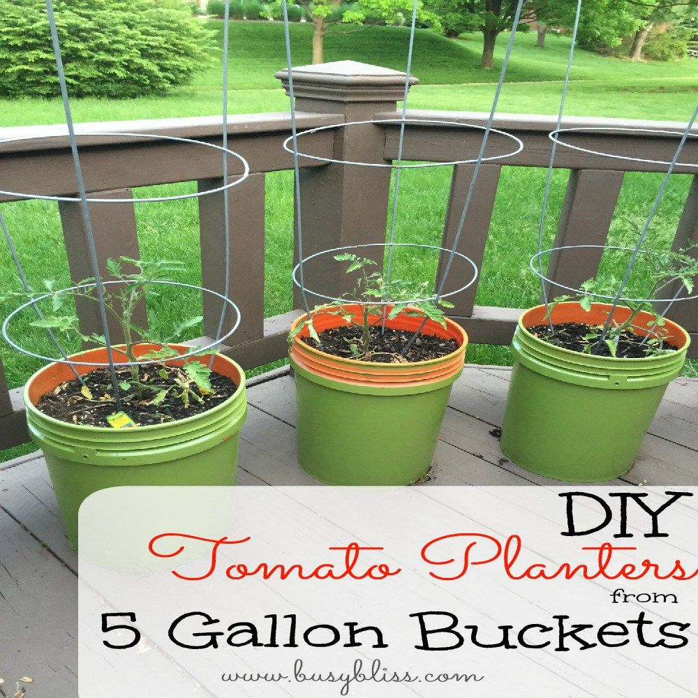 DIY Tomato Planters from 4 Gallon Buckets - Busy Bliss  Tomato