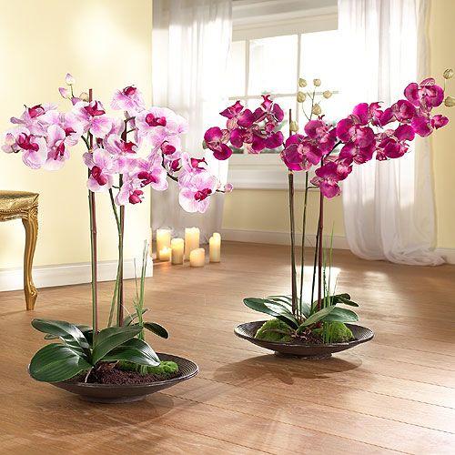 Цветки в горшках композиция